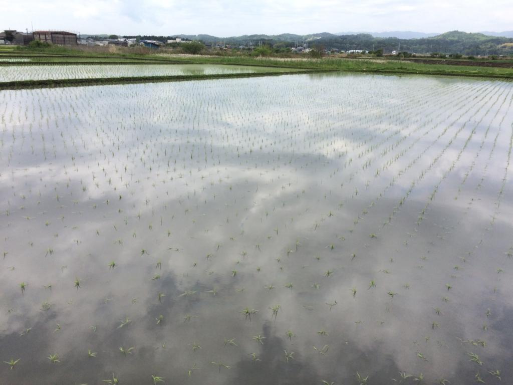 f:id:norioishiwata:20170519085849j:plain