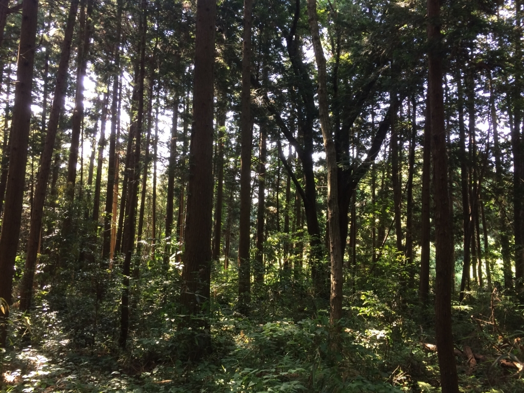 f:id:norioishiwata:20180603093416j:plain