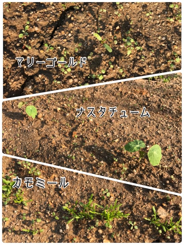 f:id:norisu0202:20170414235945j:image