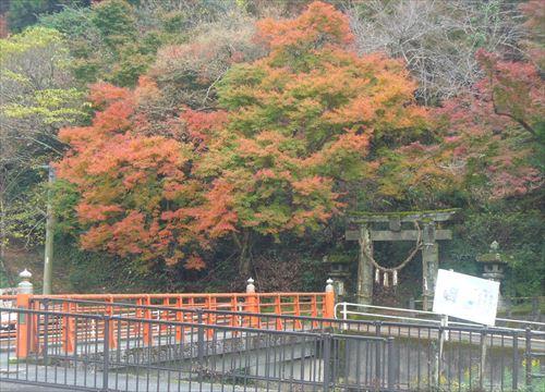 f:id:noritomi294:20161121201915j:plain