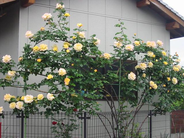 f:id:noritomi294:20170118152011j:plain