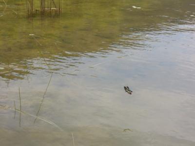 f:id:noronoyama:20110812115102j:image