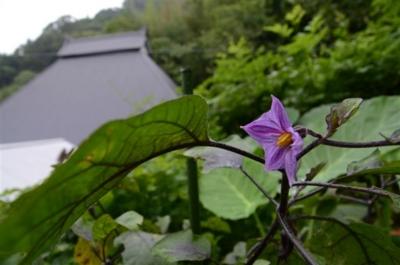 f:id:noronoyama:20110820071308j:image