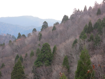 f:id:noronoyama:20111127074621j:image