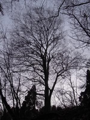 f:id:noronoyama:20111127075431j:image