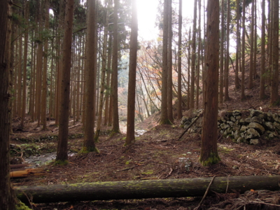 f:id:noronoyama:20111127093729j:image