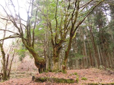 f:id:noronoyama:20111127104118j:image