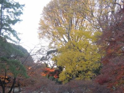 f:id:noronoyama:20111220152119j:image