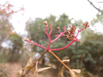 f:id:noronoyama:20120101150835j:image