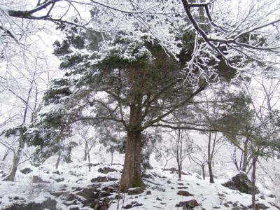 f:id:noronoyama:20120107105449j:image