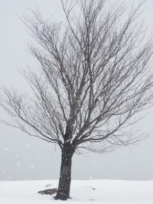 f:id:noronoyama:20120107125648j:image