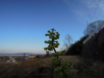 f:id:noronoyama:20120125084841j:image