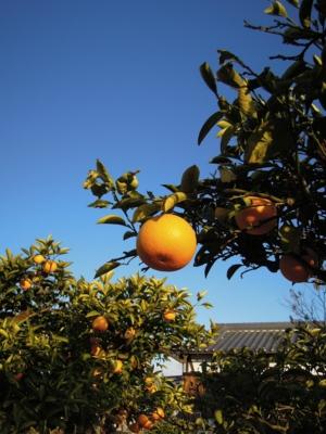 f:id:noronoyama:20120126081620j:image
