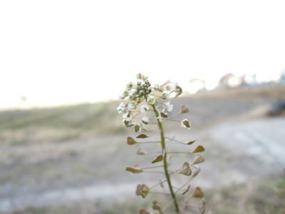 f:id:noronoyama:20120126082644j:image