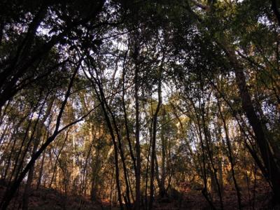 f:id:noronoyama:20120128155859j:image