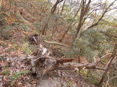 f:id:noronoyama:20120128161325j:image