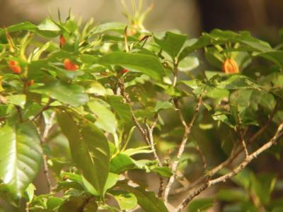 f:id:noronoyama:20120129120321j:image