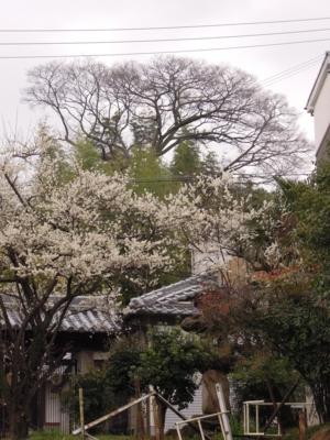 f:id:noronoyama:20120318141319j:image