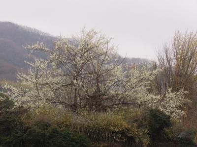 f:id:noronoyama:20120318150858j:image