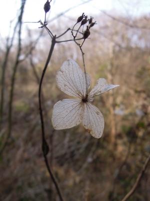 f:id:noronoyama:20120320081454j:image