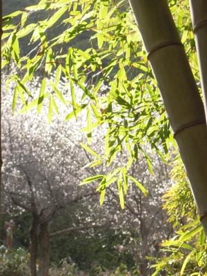 f:id:noronoyama:20120320095115j:image