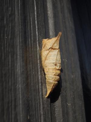 f:id:noronoyama:20120322083357j:image