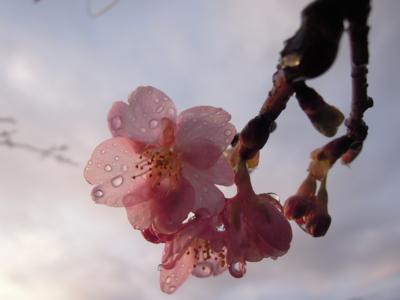 f:id:noronoyama:20120324172515j:image