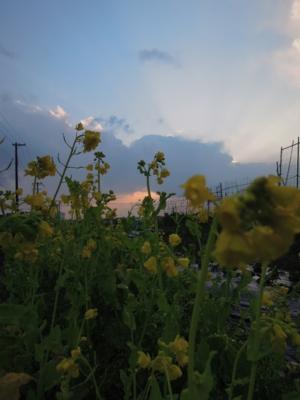 f:id:noronoyama:20120324174307j:image