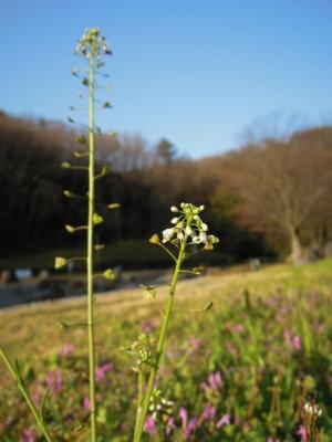 f:id:noronoyama:20120325071856j:image