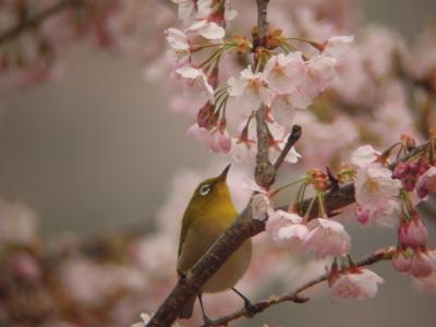 f:id:noronoyama:20120401153330j:image
