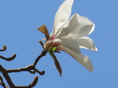 f:id:noronoyama:20120408133141j:image