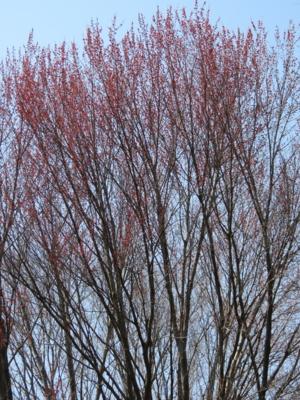 f:id:noronoyama:20120408133234j:image