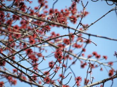f:id:noronoyama:20120408133347j:image