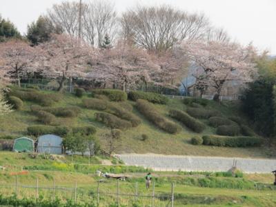 f:id:noronoyama:20120408165001j:image