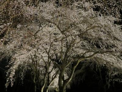 f:id:noronoyama:20120408194440j:image