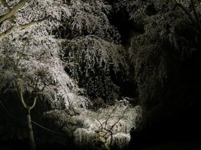 f:id:noronoyama:20120408194836j:image