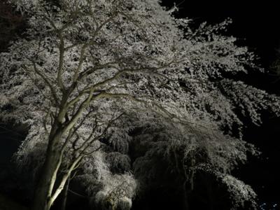f:id:noronoyama:20120408195758j:image