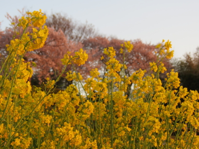 f:id:noronoyama:20120414181554j:image