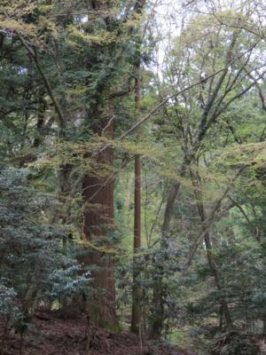 f:id:noronoyama:20120415124801j:image
