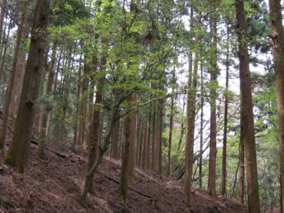 f:id:noronoyama:20120415125134j:image