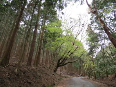 f:id:noronoyama:20120415125222j:image