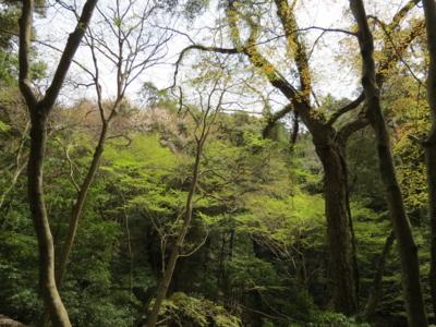 f:id:noronoyama:20120415135304j:image
