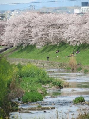f:id:noronoyama:20120415150208j:image