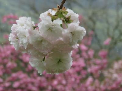 f:id:noronoyama:20120422105441j:image