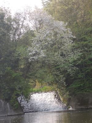 f:id:noronoyama:20120424071424j:image