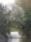 天野川の石堰