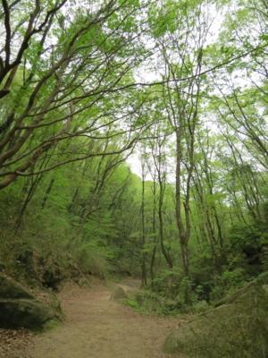 f:id:noronoyama:20120430095109j:image