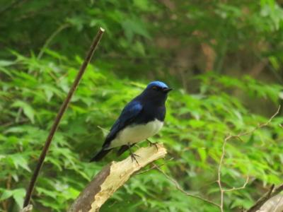 f:id:noronoyama:20120501161952j:image