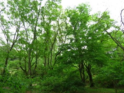 f:id:noronoyama:20120502144209j:image