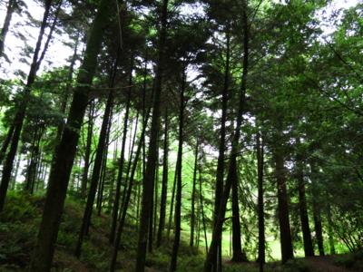 f:id:noronoyama:20120502151251j:image